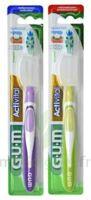 Gum Activital, Médium à BOURBOURG